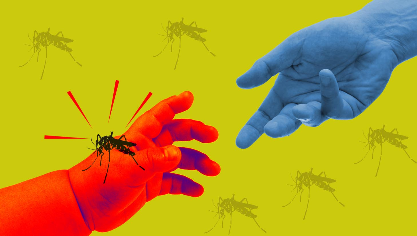 Fight The Bite At Home: Some Home Remedies For Treating Dengue - Buy Medicine Online, Online Pharmacy Noida, Online Medicines, Buy Medicine Online Noida, Nearby Pharmacy, Purchase Medicine Online, GoMedii