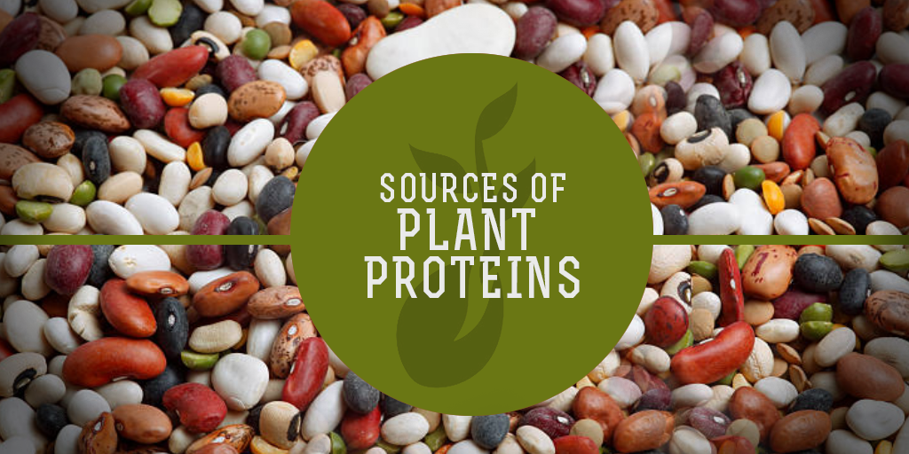 Sources of Plant Proteins, Buy Medicine Online, Online Pharmacy Noida, Online Medicines, Buy Medicine Online Noida, Nearby Pharmacy, Purchase Medicine Online, GoMedii