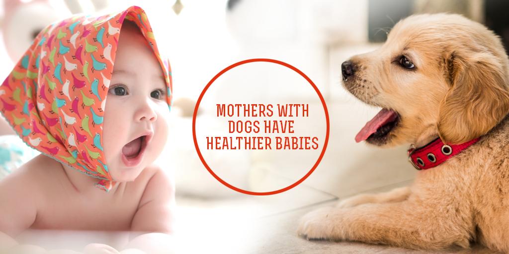 Mothers With Dogs Have Healthier Babies, Buy Medicine Online, Online Pharmacy Noida, Online Medicines, Buy Medicine Online Noida, Nearby Pharmacy, Purchase Medicine Online, GoMedii