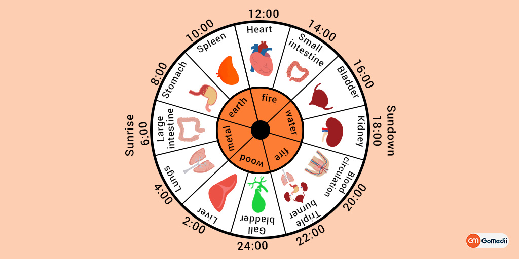 Do You Know How Your Body Clock Works?