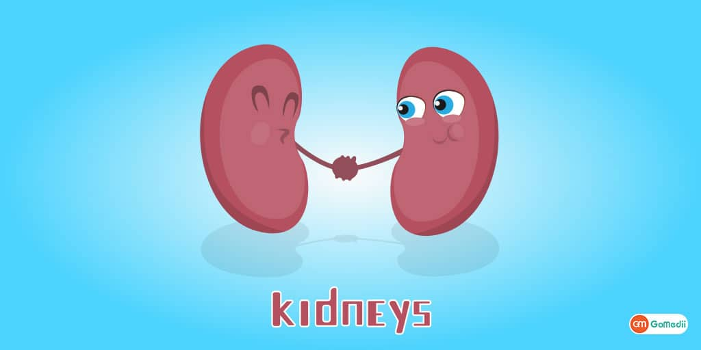 10 Tips to Keep Your Kidneys Healthy Doctor's Advice