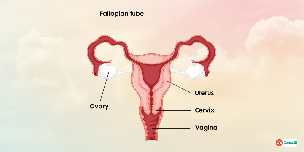 Hysterectomy The Uterus Removal Surgery