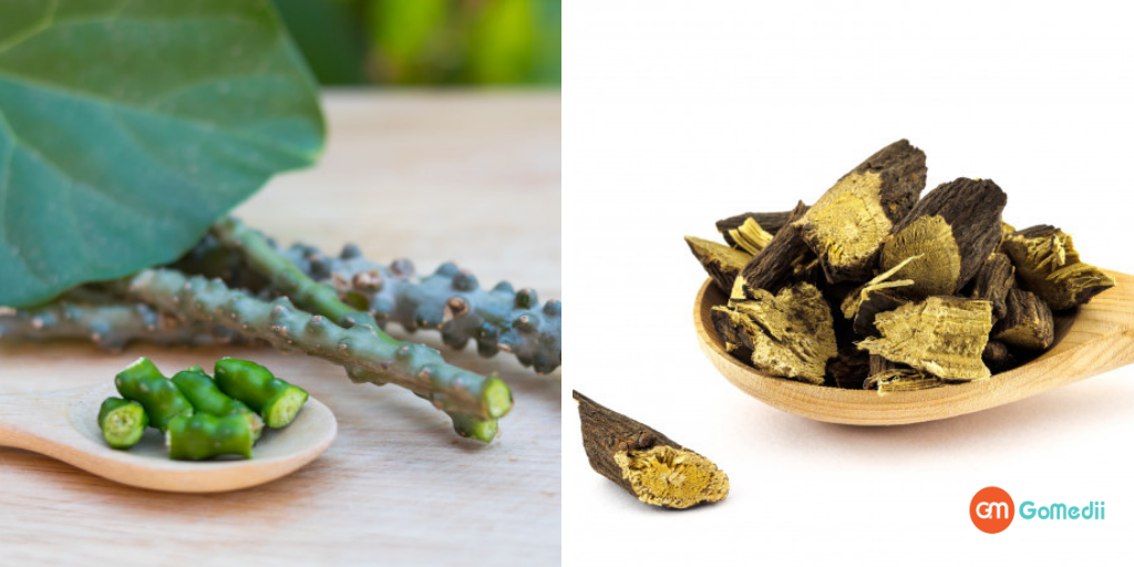Know the Advantages Of Giloy And Ashwagandha, Check Out!-GoMedii