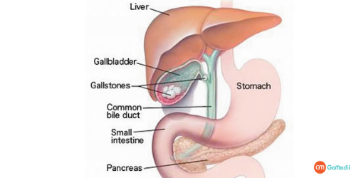 Elevated Liver Enzymes Treatment In India, Causes Elevated Liver Enzymes, Alanine Aminotransferase Test, Liver Enzymes Treatment Hospitals In India